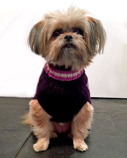 Holly&Lil exclusive design<BR>Alpaca handknitted Dog Jumpers<br>XXS to BULLDOG Gal